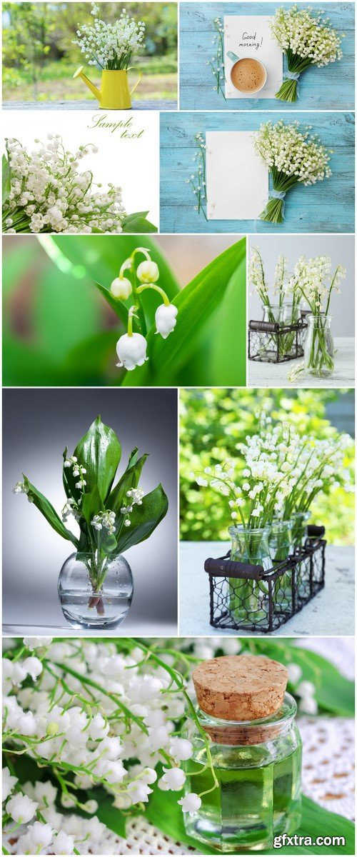 Lily of the valley #2