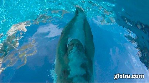 Pool underwater diver over cam