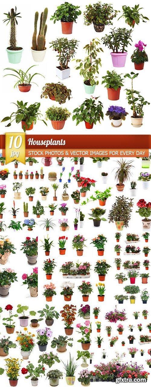 Houseplants, 10 x UHQ JPEG