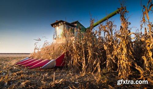 Photos - Harvesting Set 11