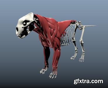 Ziva Dynamics Ziva VFX v1.2 for Maya 2014-2018 (Win/Lnx)