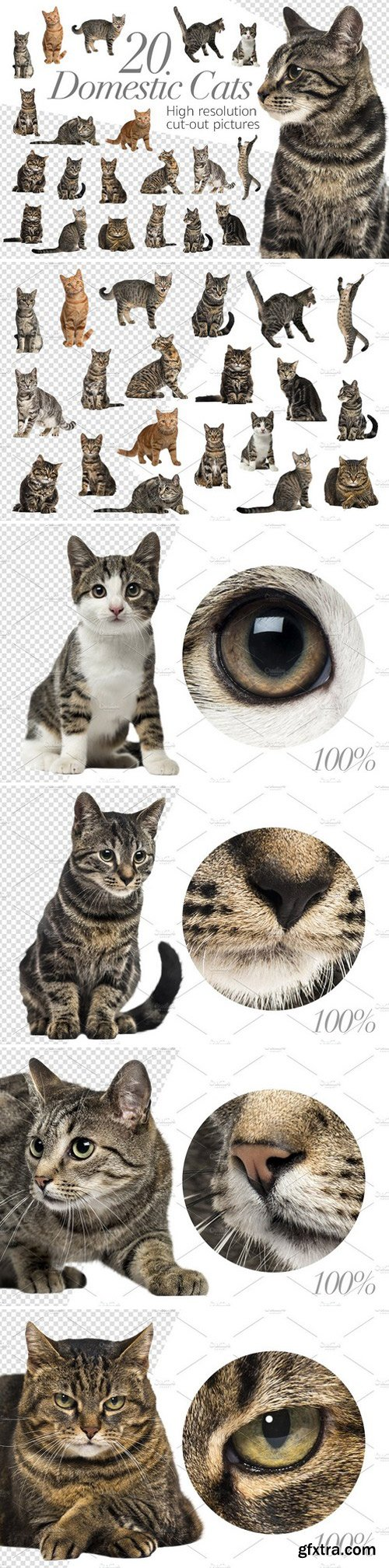 CM - 20 Domestic Cats - Cut-out Pictures 2316524