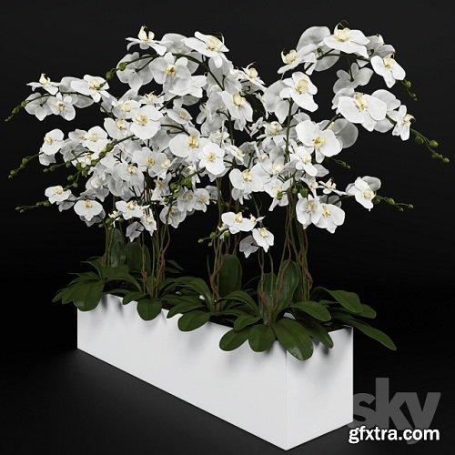 Orchid (phalaenopsis) bouquet 3