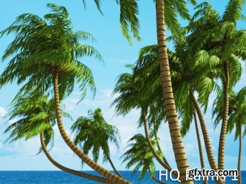 VrayC4D - HQ Palms vol.1 for Cinema4D