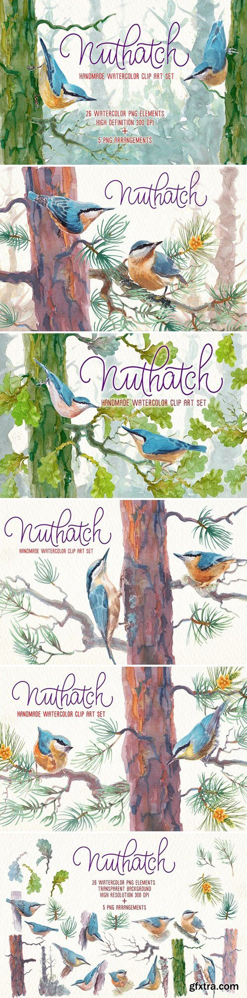 CM - Nuthatch watercolor clipart set 2457736