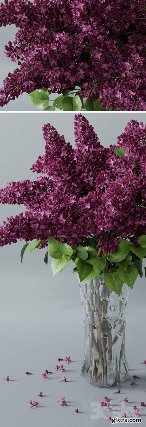 Lilac 3 3d Model