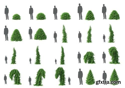 HD Trees Vol 6 for Cinema4D
