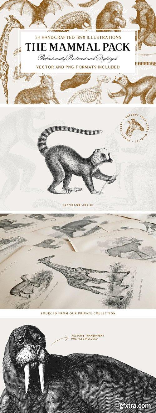 CM - 54 Handcrafted Mammal Illustrations