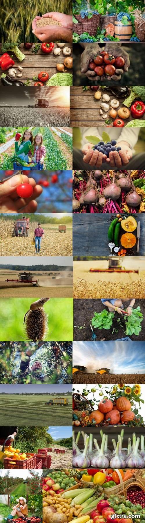 Harvest still life fruit vegetables agriculture farming 25 HQ Jpeg