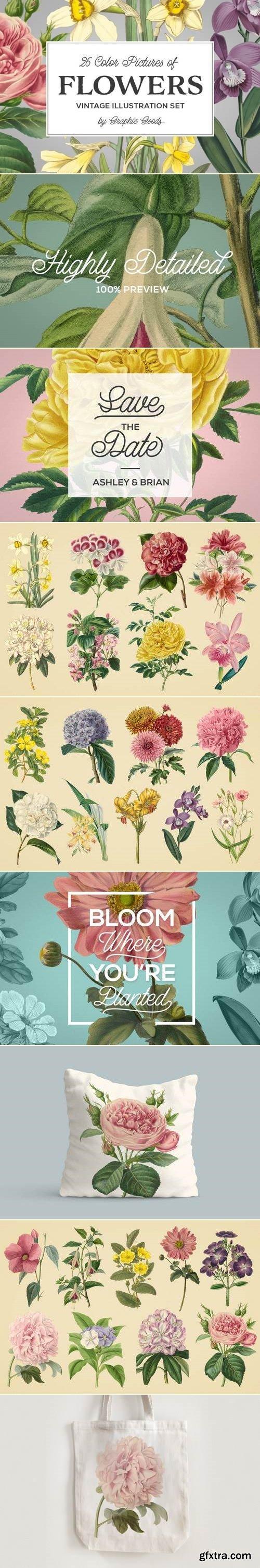 Vintage Illustrations of Flowers
