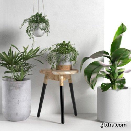Plants Collection 25 3d Models