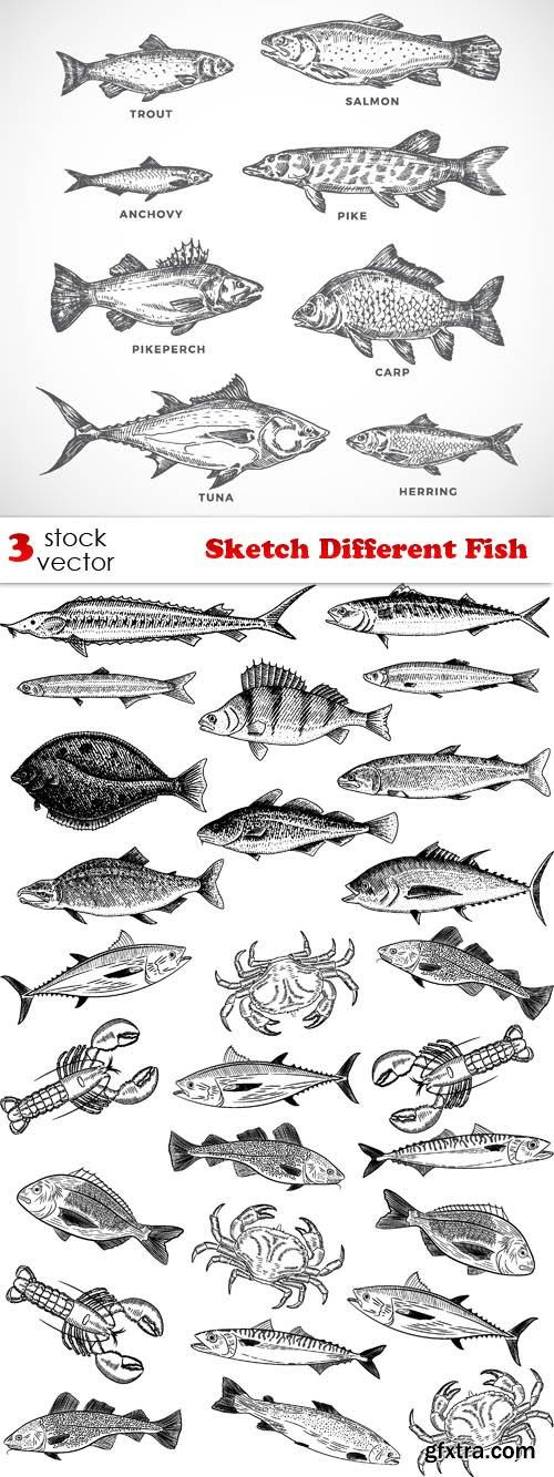 Vectors - Sketch Different Fish Set