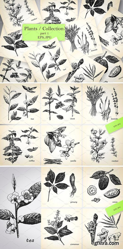 CM - Plants / Collection 2544631