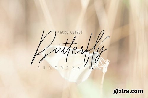 Elegantly and Modest Font Family  - 6 Fonts