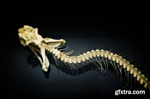 Animal human skeleton 25 HQ Jpeg