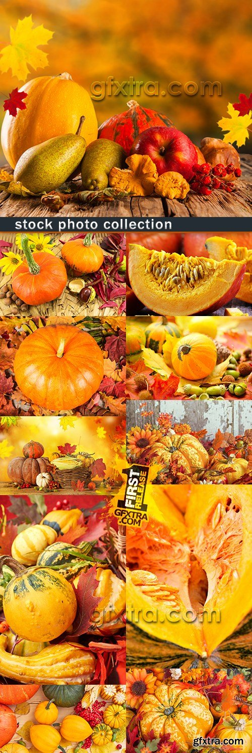 Pumpkin holiday gratitude against background autumn foliage