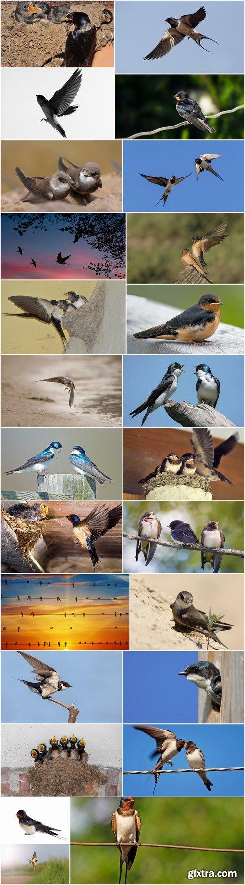 Swallow bird flight wing feather nestling nest 25 HQ Jpeg