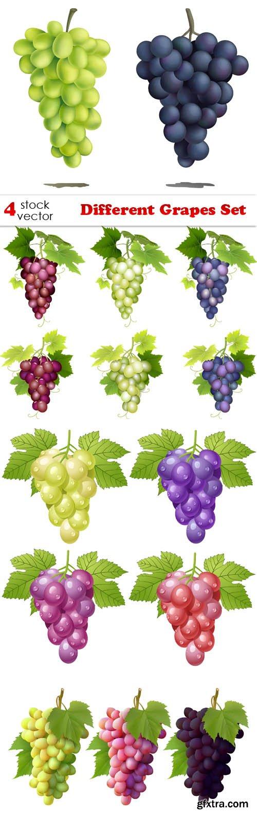 Vectors - Different Grapes Set