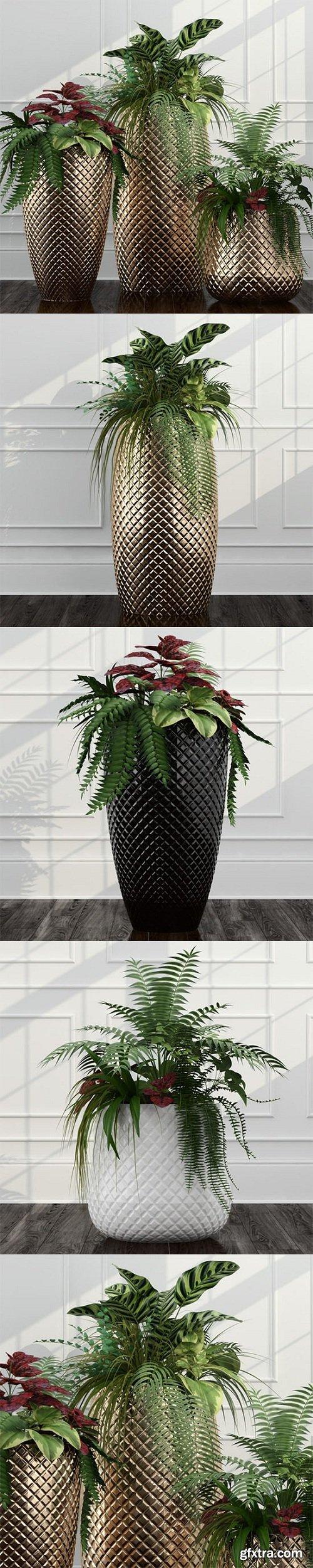 Room plants 11