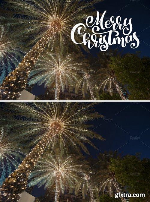 CM - Christmas palm 2127725