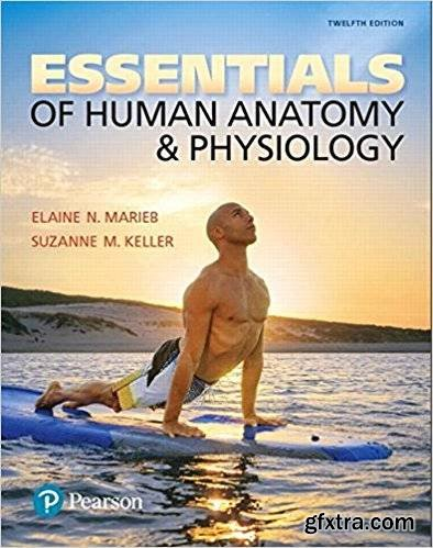 Essentials of Human Anatomy & Physiology, 12th Edition