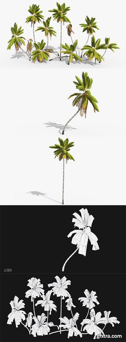 Cubebrush - Coconut Palm Trees Asset 1