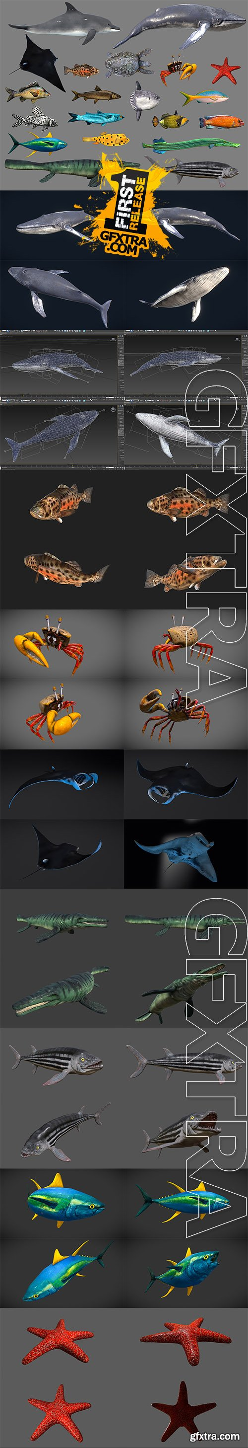 Cubebrush - Low poly Fish Collection Animated Pack 4