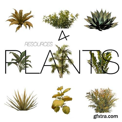 PSD & PNG Transparent - Plants 2019