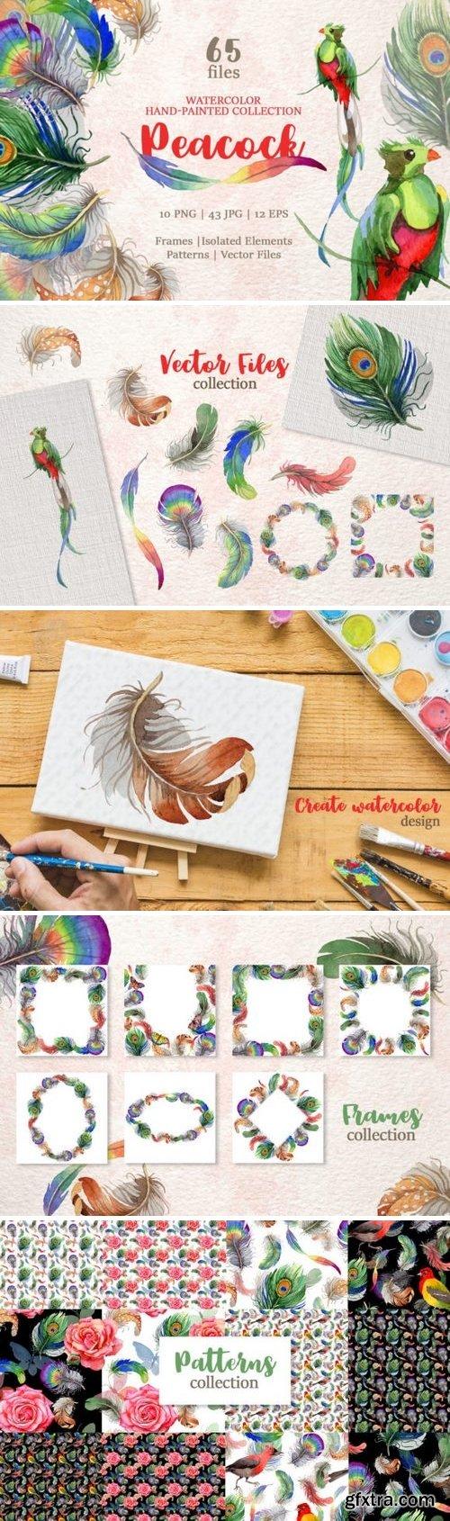 CM - Peacock Watercolor png 3356960