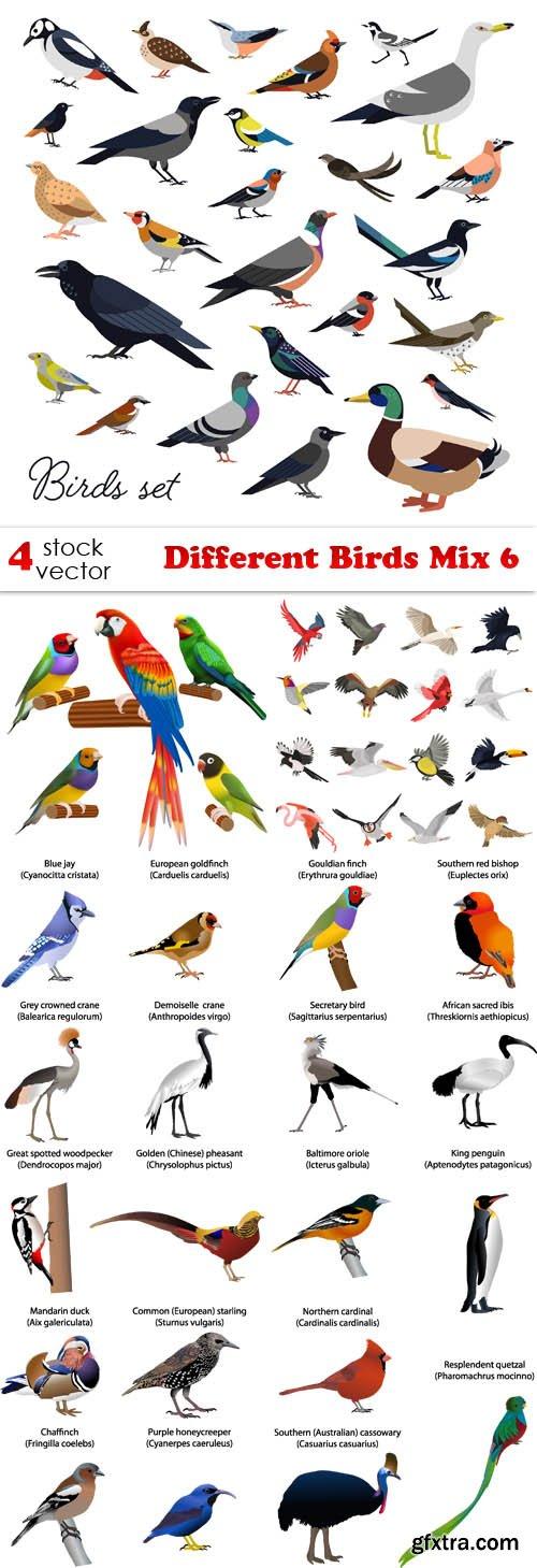 Vectors - Different Birds Mix 6