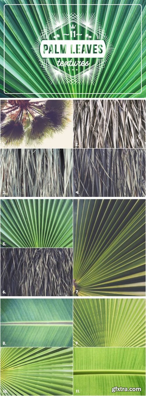 CM - 11 Palm Leaves Textures 3361601