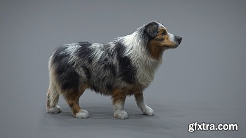 The Gnomon Workshop - Realistic Dog Grooming for Production with Xgen with Jordan Soler
