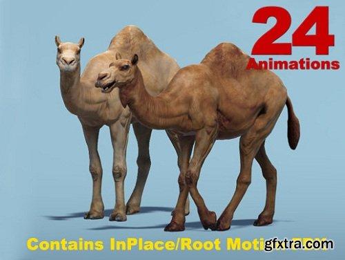 African Animal - Camel (Dromedary)