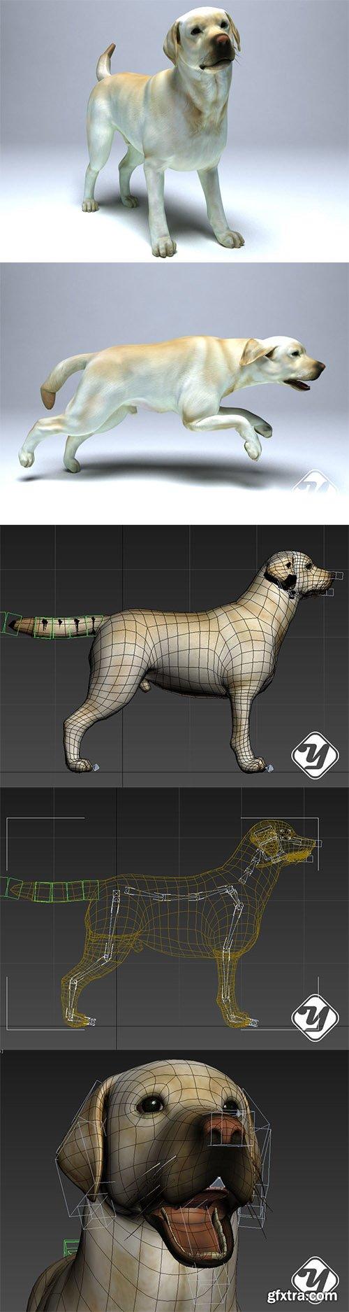 Cgtrader - Labrador Dog Low-poly 3D model