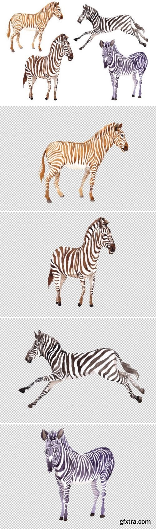 CM - Zebra set Watercolor png 3486061