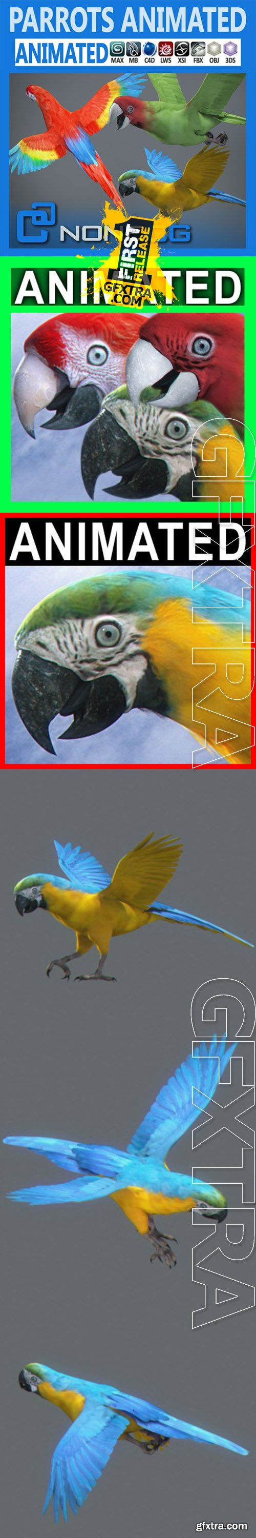Cgtrader - Animated Parrots Pack 3D model