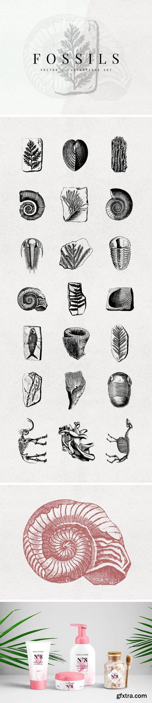 21 Fossils Vector Illustrations Set