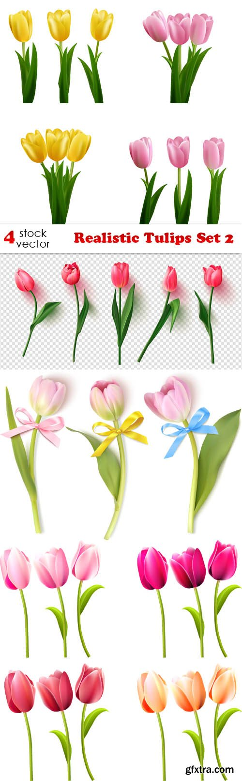 Vectors - Realistic Tulips Set 2