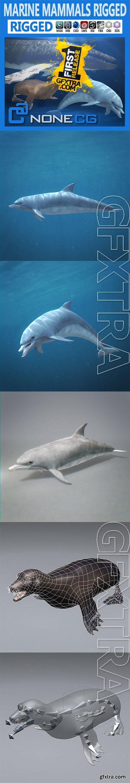 Cgtrader - Pack - Marine Mammals 3D model