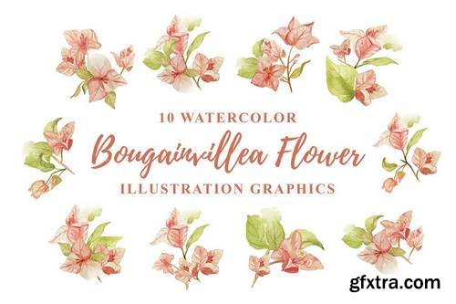 10 Watercolor Bougainvillea Flower Illustration