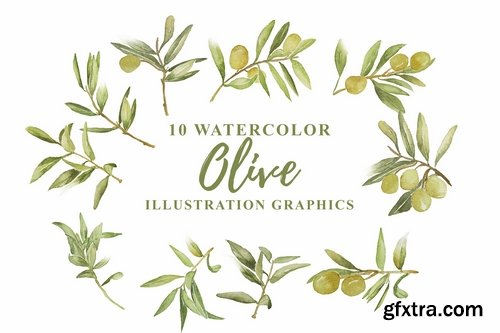 10 Watercolor Olive Illustration Graphics