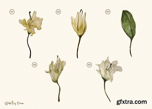 15 Watercolor White Lily Flower Illustration