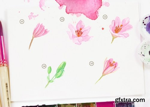 15 Watercolor Lily Brindisi Flower Illustration