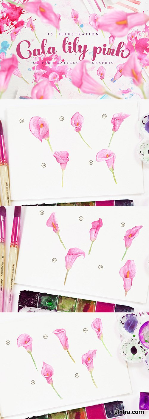 15 Watercolor Cala Lily Pink Flower Illustration