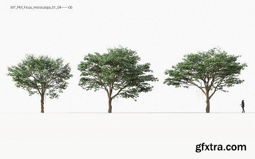 Maxtree - Plant Models Vol 11