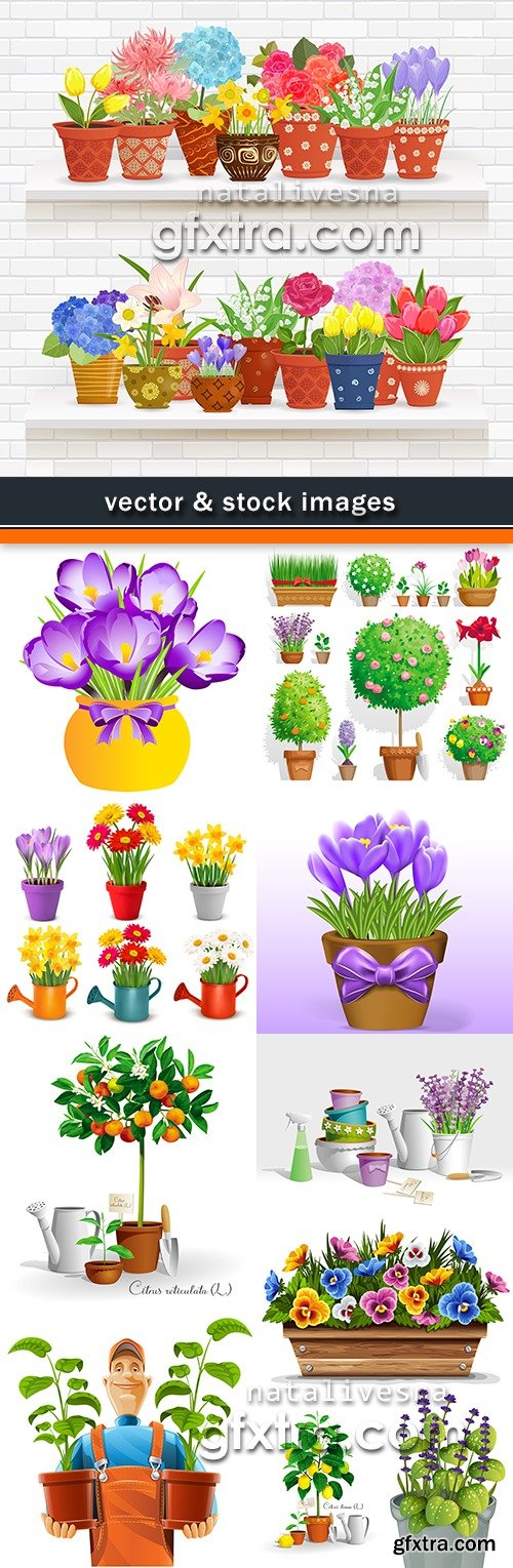 Gardening decorative spring flowers in garden and flat dishes