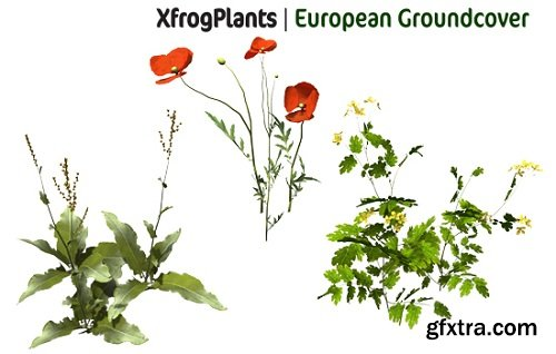 XfrogPlants - European Groundcover