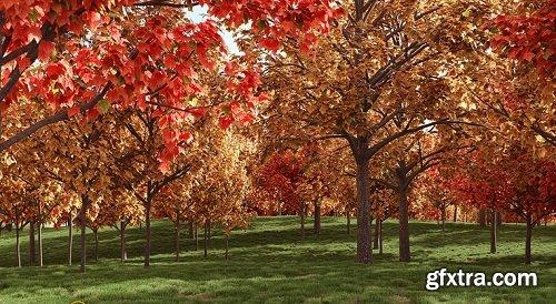 Acer Rubrum Trees 3d Models