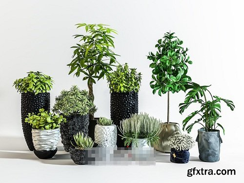 Plants Collection 87