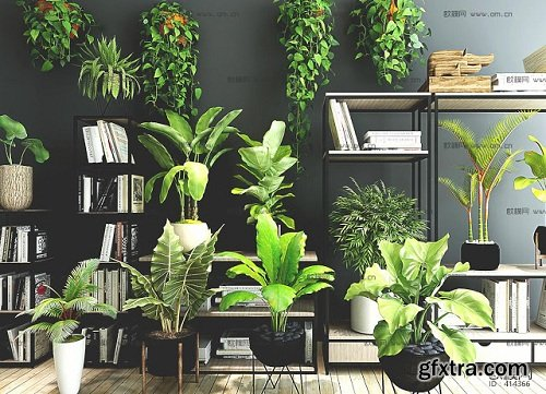Plants Collection 88